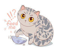 Cat Asks For Feed Sitting In Front Of An Empty Bowl