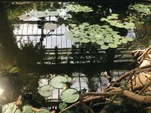 A Beautiful Artificial Pond