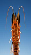 The Big Prawn, Exmouth, Western Australia