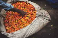 Sorting Marigolds