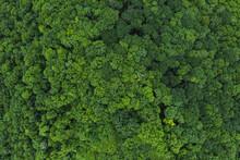 Greenery And Nature