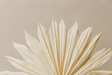 Bleached Palm Fan