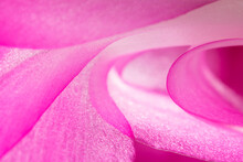 Cactus Flower Petal Abstract