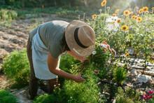 Woman In A Flower Garden