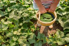 Child In Field Holding Basket Of Vegetables