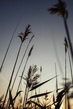 Meadow-grass At Sunset Time