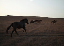 A Herd Prancing Horses In The Mountains