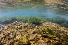 Whitewater Mountain River Underwater Habitat