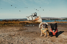 French Bulldogs By Point Reyes Shipwreck