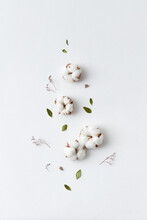 Dried Cotton Flowers Composition
