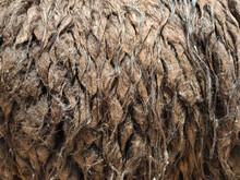 Detail Of Llama Wool Texture