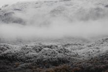 Winter Shades