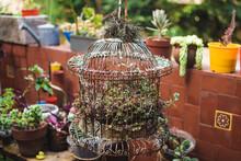 Rusty Birdcage In A Patio