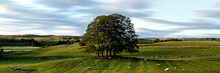Yorkshire Dales Farm