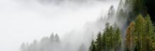 Misty Alpine Forest Italian Alps