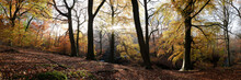 Autumn Forest In The Peak District