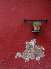 Colorful Red Wall With A Plant