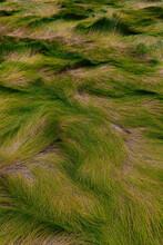 Amber Marsh Grass In Autumn Season