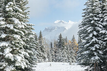 Snow-covered Mountain Peak Through A Forest Of Trees
