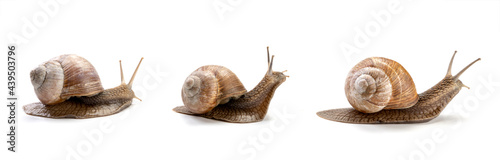 Photo three garden snail isolated on a white background