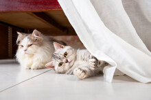 Curious Cat Hide And Play Under Bed