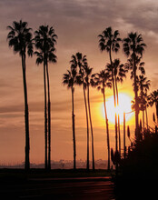 Palm Tree Lined Street In California At Sunset