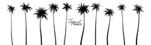 Set Of Black Silhouettes Of Palm Trees. Vector Illustration