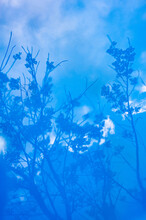 Abstract Blue Trees