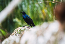 Blue Bird In Tropical Forest