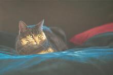 Tabby Cat In The Light
