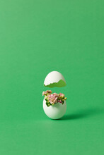 Easter Broken Egg With Flowers On Green Background
