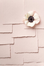 Blossom On Layered Pink Paper