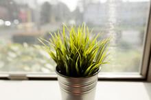 Bright Green Grass In Metal Pot On Window Sill