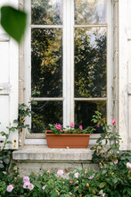 Window With Pink Roses And Geraniums