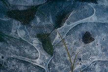 Abstract Ice Shapes With Trapped Vegetation