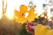 Yellow Leaf With A Heart In A Female Hand, Background Of Golden Leaves Lie Chaotically On The Ground, Autumn Mood Concept, Seasonal
