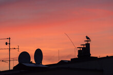 Colorful Red And Orange Sunset Over The City. Silhouettes Of TV Antennas And Ventilation Chimneys On The Roofs And Gull Perched On The Chimney