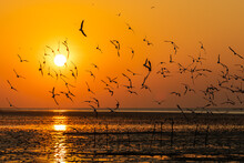 Morning Scene Of Silhouetted Flying Seagulls Over Sea Surface.