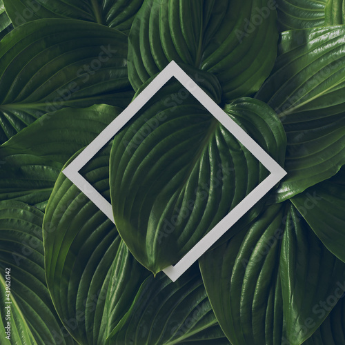 Creative tropical layout made of green leaves and white paper frame. Minimal nature concept.