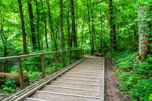 Wooden Stairs Path In The Forest In Summer Season