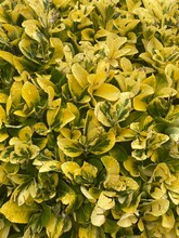 Yellow Plant, Flowers, Nature
