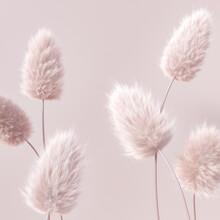 Floral Fluffy Boho Pastel Beige Color Background, Beautiful Botanic Calm Inspiration 3d Rendering