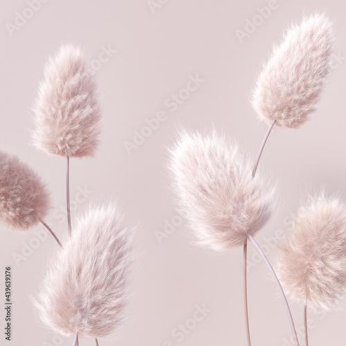 Fototapeta Floral fluffy boho pastel beige color background, beautiful botanic calm inspira