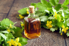 A Bottle Of Greater Celandine Tincture With Chelidonium Majus Flowers And Leaves