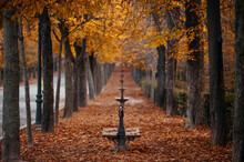 Benches On Alley In Autumnal Park