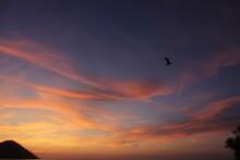 Foto Tramonto Con Uccello