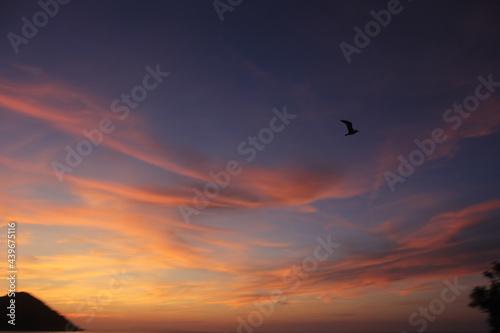 Fotografija Foto tramonto con uccello