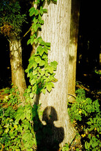 A Shadow In The Woods