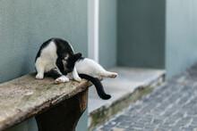 Cat Washing Herself Outdoors
