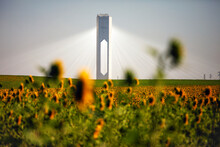 Sunflowers And Solar Plant